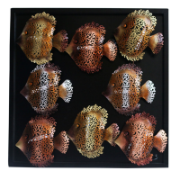 Iron Netted Octal Fish Wall Décor